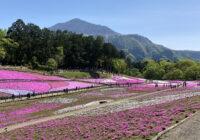 羊山公園 芝桜2021